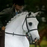 Swingate Equestrian Photo